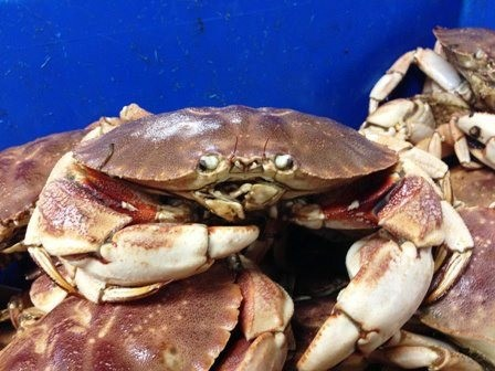 Order Live Maine Lobster Online | Smore Newsletters for Business