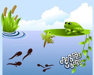 Leap into the Life Cycle of a Frog