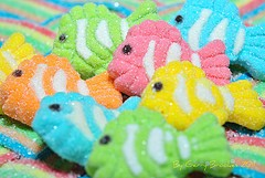 fish lollies (yummy to eat)