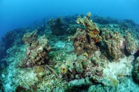 The reefs at Australia