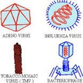 Basics of Viruses