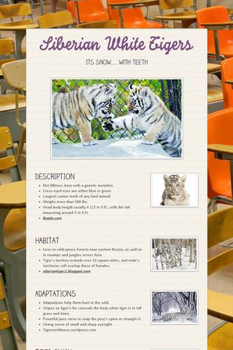 Siberian White Tigers