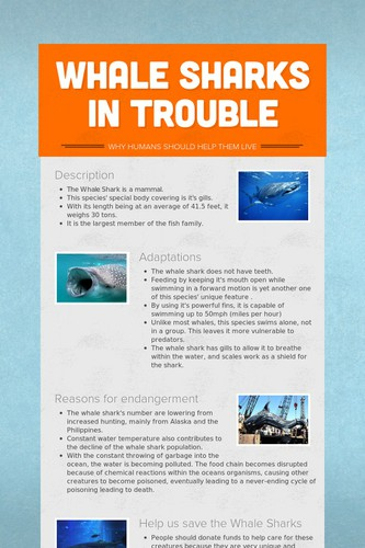Whale Sharks In Trouble