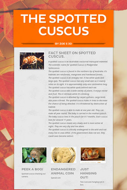 The spotted cuscus