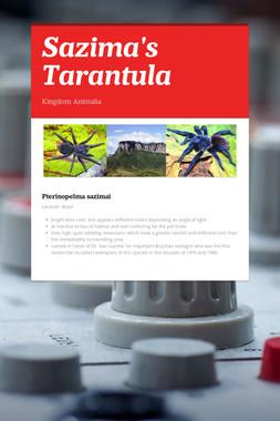 Sazima's Tarantula