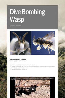 Dive Bombing Wasp