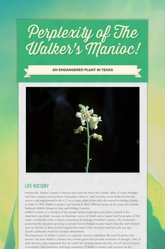 Perplexity of The  Walker's Manioc!