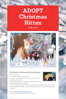 ADOPT  Christmas Kitten