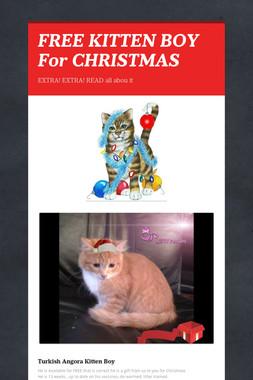 FREE KITTEN BOY For CHRISTMAS