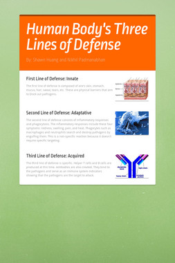 Human Body's Three Lines of Defense
