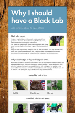 Why I should have a Black Lab