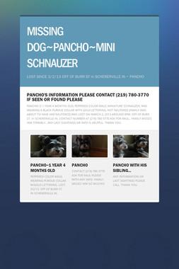 MISSING DOG~PANCHO~MINI SCHNAUZER