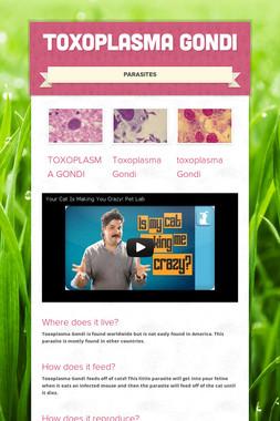 Toxoplasma Gondi