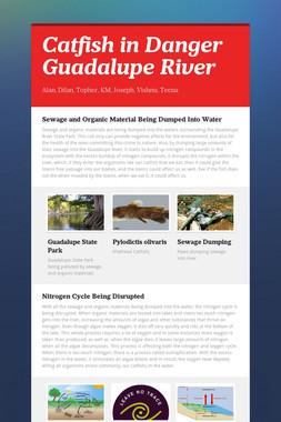 Catfish in Danger Guadalupe River
