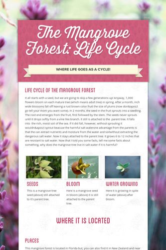 The Mangrove Forest: Life Cycle