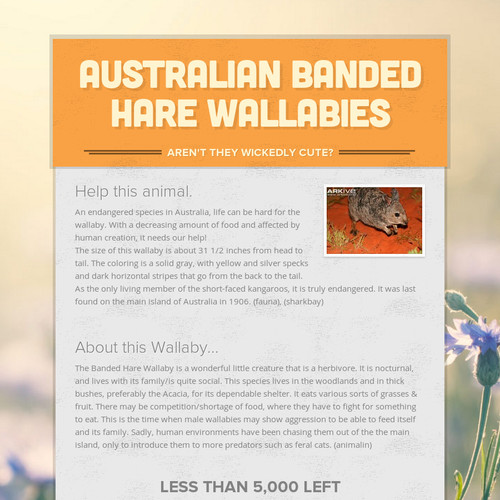 Australian Banded Hare Wallabies