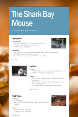 The Shark Bay Mouse