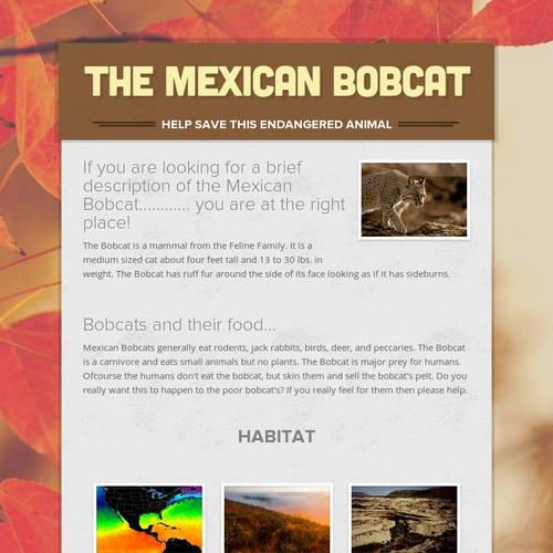 The Mexican Bobcat