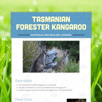 Tasmanian Forester Kangaroo