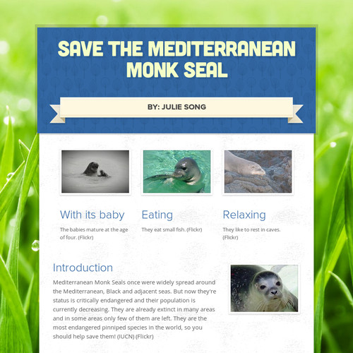Save the Mediterranean Monk Seal