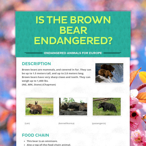 IS THE BROWN BEAR ENDANGERED?