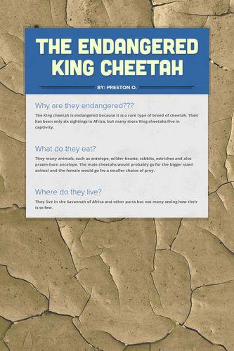 The Endangered King Cheetah