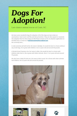 Dogs For Adoption!