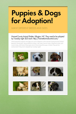 Puppies & Dogs for Adoption!