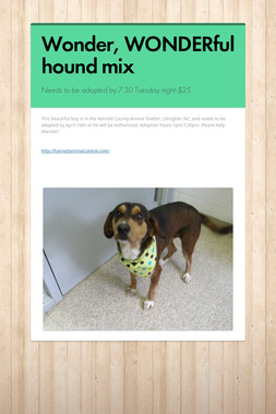 Wonder, WONDERful hound mix