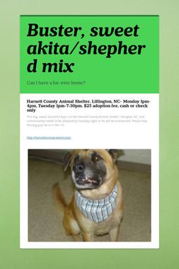 Buster, sweet akita/shepherd mix