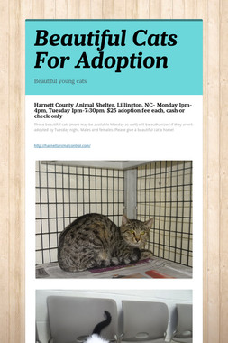 Beautiful Cats For Adoption