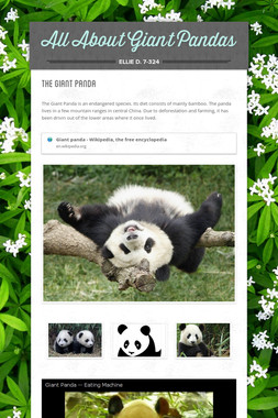 All About Giant Pandas