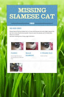 Missing Siamese Cat