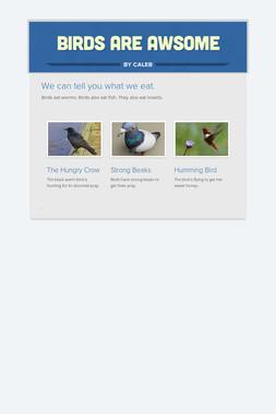 Birds are Awsome