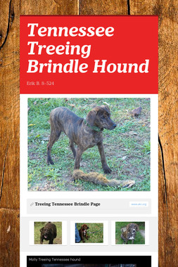 Tennessee Treeing Brindle Hound