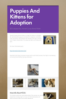 Puppies And Kittens for Adoption