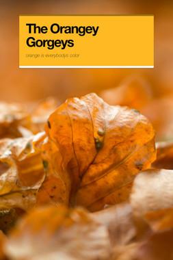 The Orangey Gorgeys