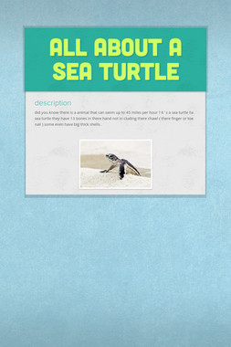 all about a sea turtle