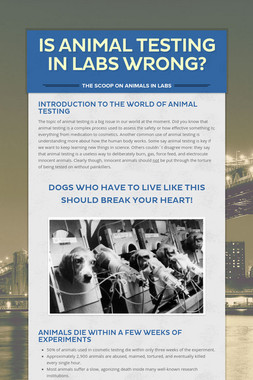 Is Animal Testing In Labs Wrong?