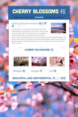 Cherry Blossoms 桜