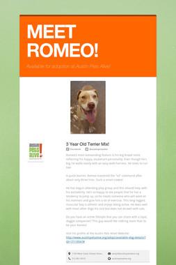 MEET ROMEO!