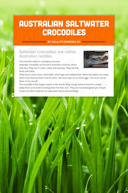 Australian Saltwater Crocodiles