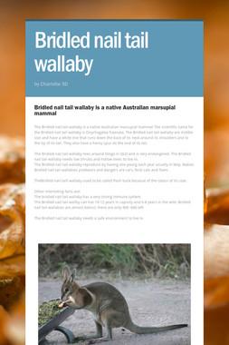 Bridled nail tail wallaby