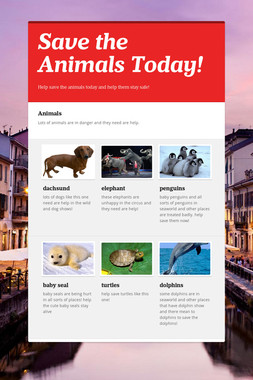 Save the Animals Today!