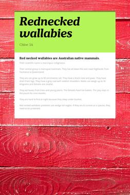 Rednecked wallabies