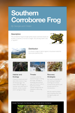 Southern Corroboree Frog