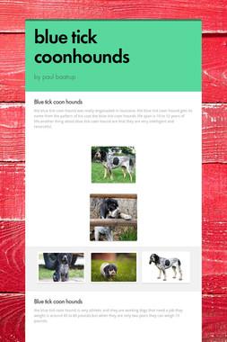 blue tick coonhounds