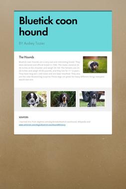 Bluetick coon hound