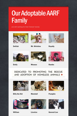 Our Adoptable AARF Family
