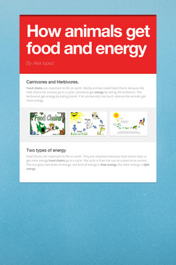 How animals get food and energy